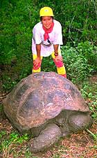 Galapagos Giant Tortoise in the highlands of Santa Cruz